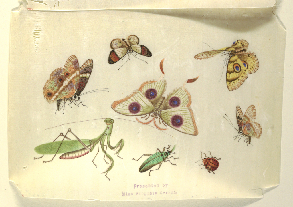 Detailed representation in color of four butterflies, a moth and three insects, including the praying mantis.