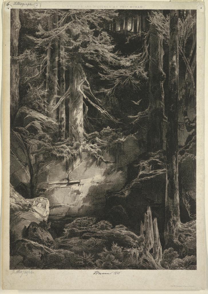 Print, A Forest Glen