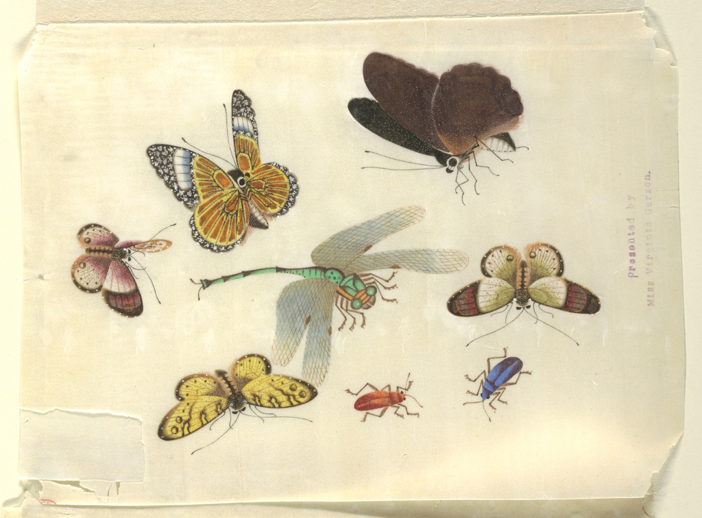 Detailed representation in color of five butterflies, a dragonfly and two beetles.