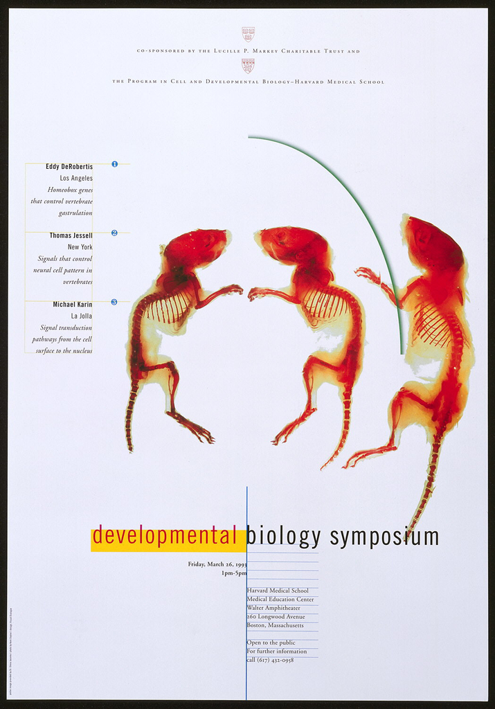 Poster, Developmental Biology Symposium, 1993 | Objects | Collection