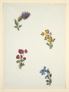 Upper left, yellow and violet flower; upper right, four yellow and black flowers; lower left, red clover-like flower; lower right, two blue flowers.  Ruled border line in pencil.