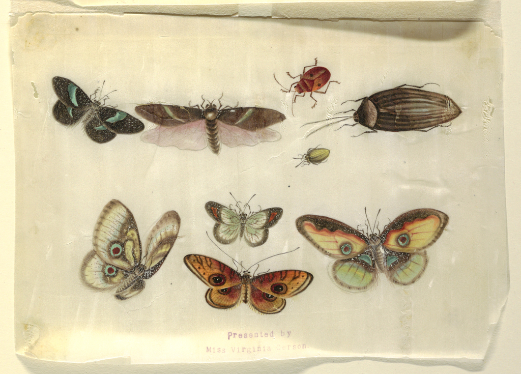 Detailed representation in color of five butterflies and four insects one winged insect and three beetles.