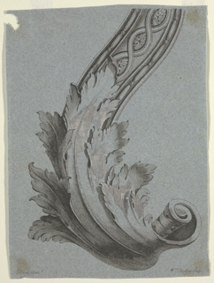 Scroll of foliated moulding. Right top corner: 5; bottom corner: Edwards Delin[t superscript]; Wm. Darling Sculp.