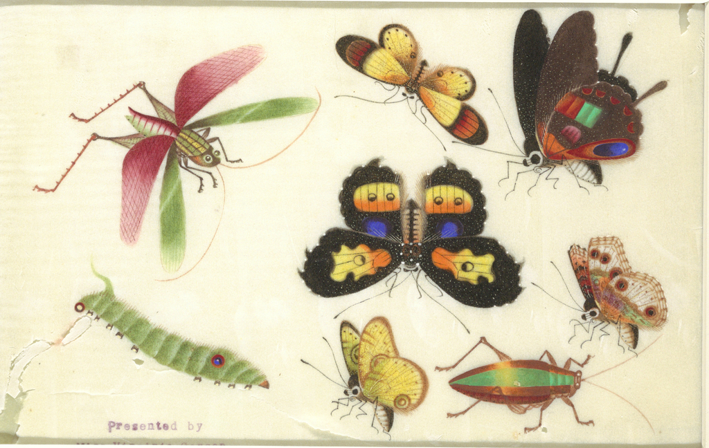 Detailed representation of five butterflies, a flying grasshopper, caterpillar and a beetle. Insects and butterflies in brilliant colors.