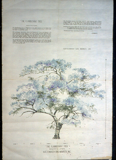 Mural miniature of The Flamboyant Tree designed to run up the wall and onto the ceiling. Miniature contains mural dimensions and height of printed designed, as well as installation instructions. Design is printed in lavender, blue and green on off-white ground.