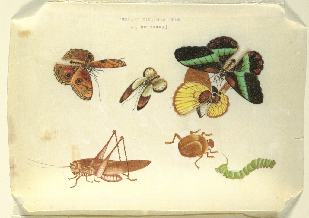 Detailed representation in color of four butterflies, a grasshopper, caterpillar, and a beetle.