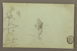 Recto: Horizontal view showing a plant and its blossom, at left; and a rock between the American And Canadian falls, at center.