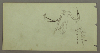 Drawing, White Heron, possibly 1869