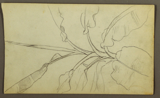 Drawing, Botanical Sketches, Ecuador, or Colombia; Verso: Botanical Sketches