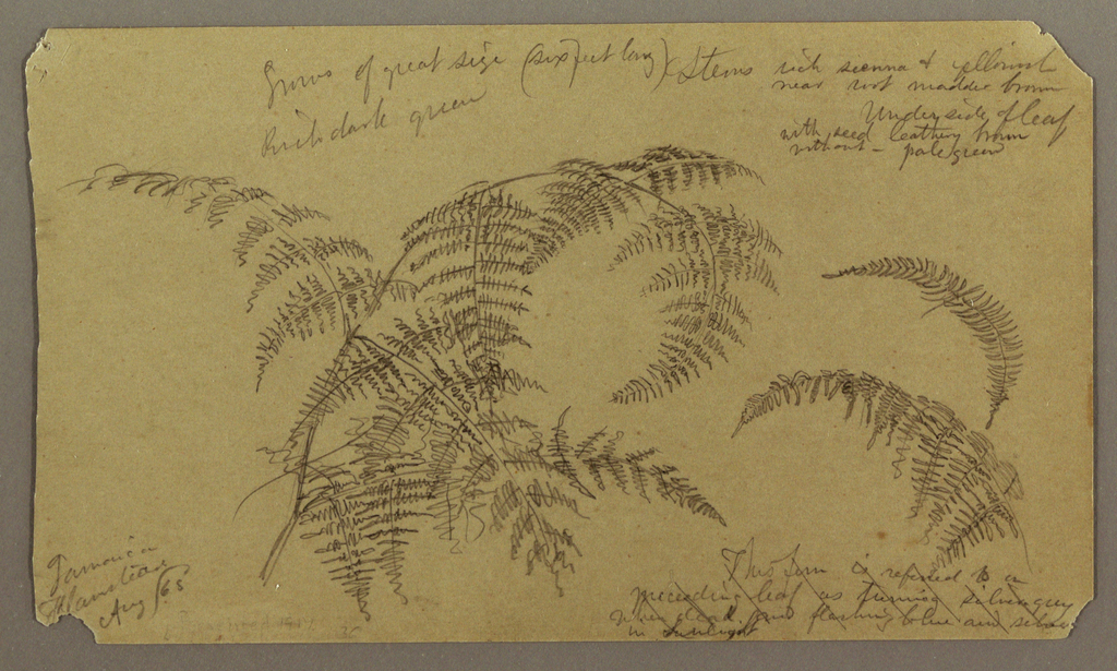 Drawing, Botanical Sketches, August 1865