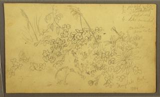 Drawing, Botanical Sketches, May 1857
