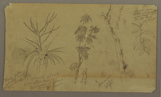 Drawing, Botanical Sketches; Verso: Clouds, July 1865