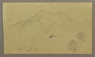 Drawing, Landscape, plants, Bloxburgh, August 1865