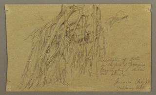 Drawing, Hanging Roots, Galleway Hill, August 1865