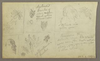 Drawing, Botanical Sketches, Ecuador, or Colombia; Verso: Botanical Sketches