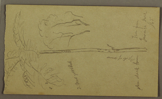 Drawing, Botanical Sketches, June 1865