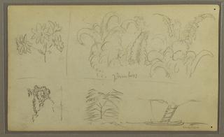 Drawing, Botanical Sketches; Verso: Lizard, Palm, 1857