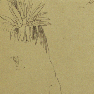 Drawing, Landscape; Verso: Botanical Sketches, 1865