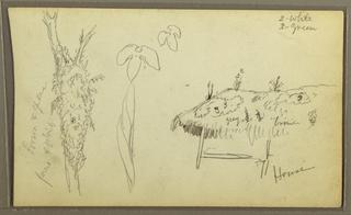 Drawing, Botanical Sketches, house; botanical sketches, 1857