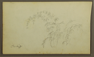Drawing, Botanical Sketches; Verso: Botanical Sketches, 1857