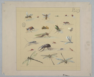 Square composition outlined in thin black line with 22 insects represented in various positions.