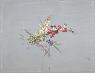 Four stems with flowers and foliage at center of page. From left: stalk with pink and white flowers running most of its length, stalk with red and purple flowers running most of its length, stalk with two violet flowes, and stalk with white flowers running most of its length.
