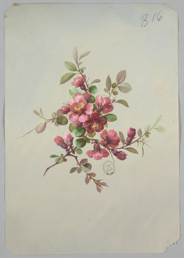 Cluster of pink and red blossoms and blooms surrounded by foliage at center of page.