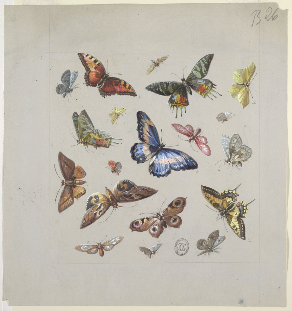 Drawing, Design for Textile or Wallpaper: Butterflies