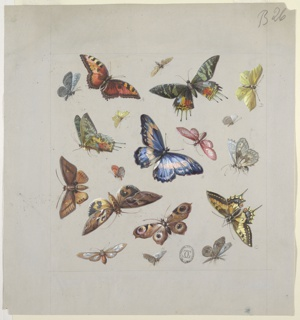 Square composition at center of page with butterflies and moths of various colors and sizes flying in different directions.