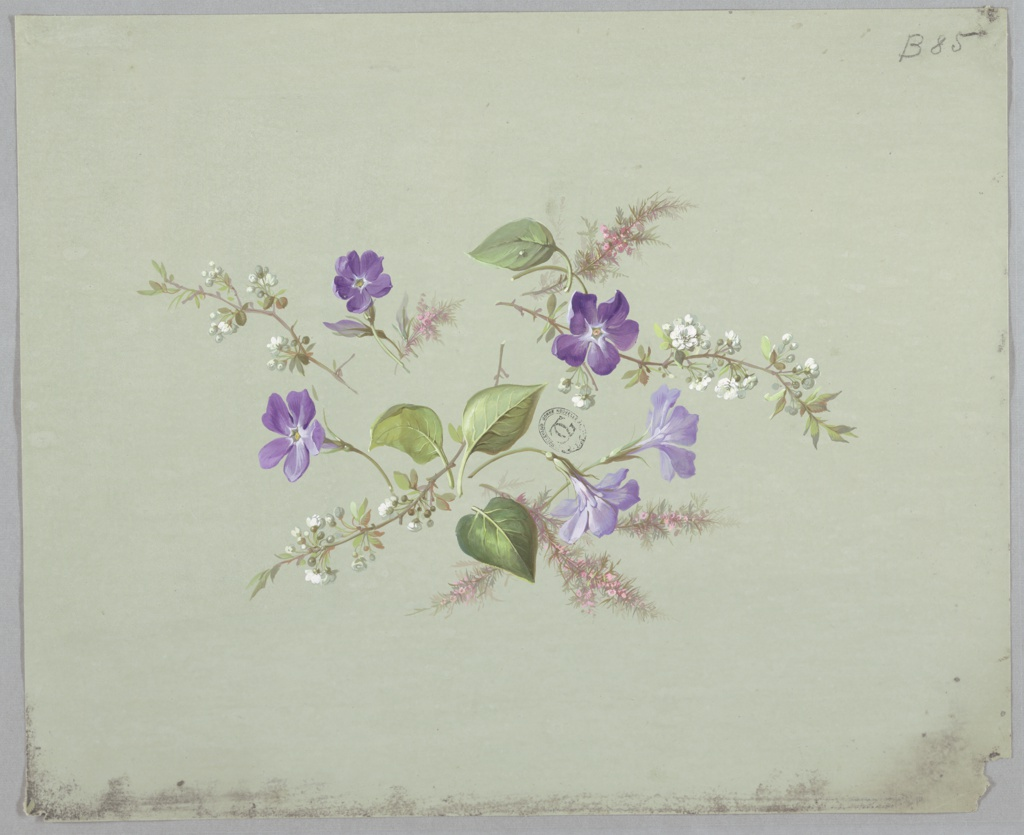 Cluster of flowers and foliage at center of page. Five purple flowers facing various directions, four green leaves facing various directions, three branches with white blossoms radiating from center, and three branches with pink blossoms and tuft-like foliage facing various directions.