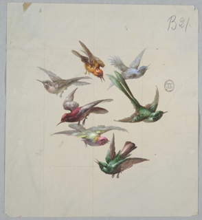 Grouping of seven birds in flight, all flying different directions. Clockwise from top: brown bird facing downward and right, light blue bird facing right, green bird with long tailfeathers facing right, green with brown wing and tailfeathers bird facing left, white bird with pink head facing right, red bird with white wing and tailfeathers facing left, and gray bird facing left.