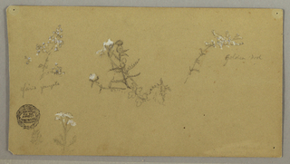 Recto: Horizontal view of a blossoming plant at top row left; a thistle at center; a stem of Golden Rod with blossoms at right; a bough and a plant at bottom left. Verso: Oblique view of a mountain range.