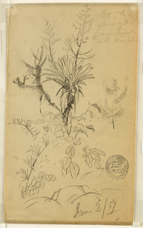 Recto:  Vertical sketch of plants and trees. Verso: Horizontal sketch of the sky over the sea.