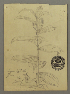 Drawing, Plant study, June 26, 1856