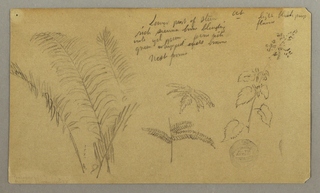 Drawing, Fern studies, October 1865