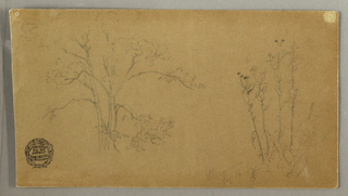 Horizontal study of a group of trees at left and high stemmed plants at right.