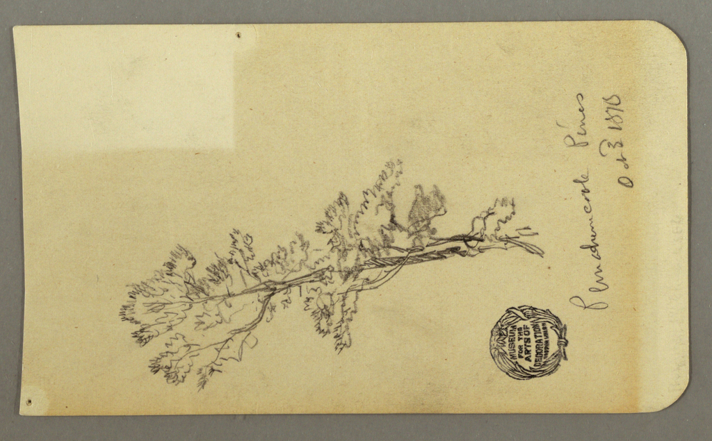 Drawing, Pine Tree, October 3, 1878