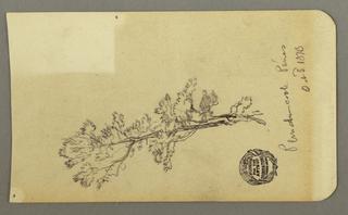 Drawing, Pine Tree, October 3, 1878