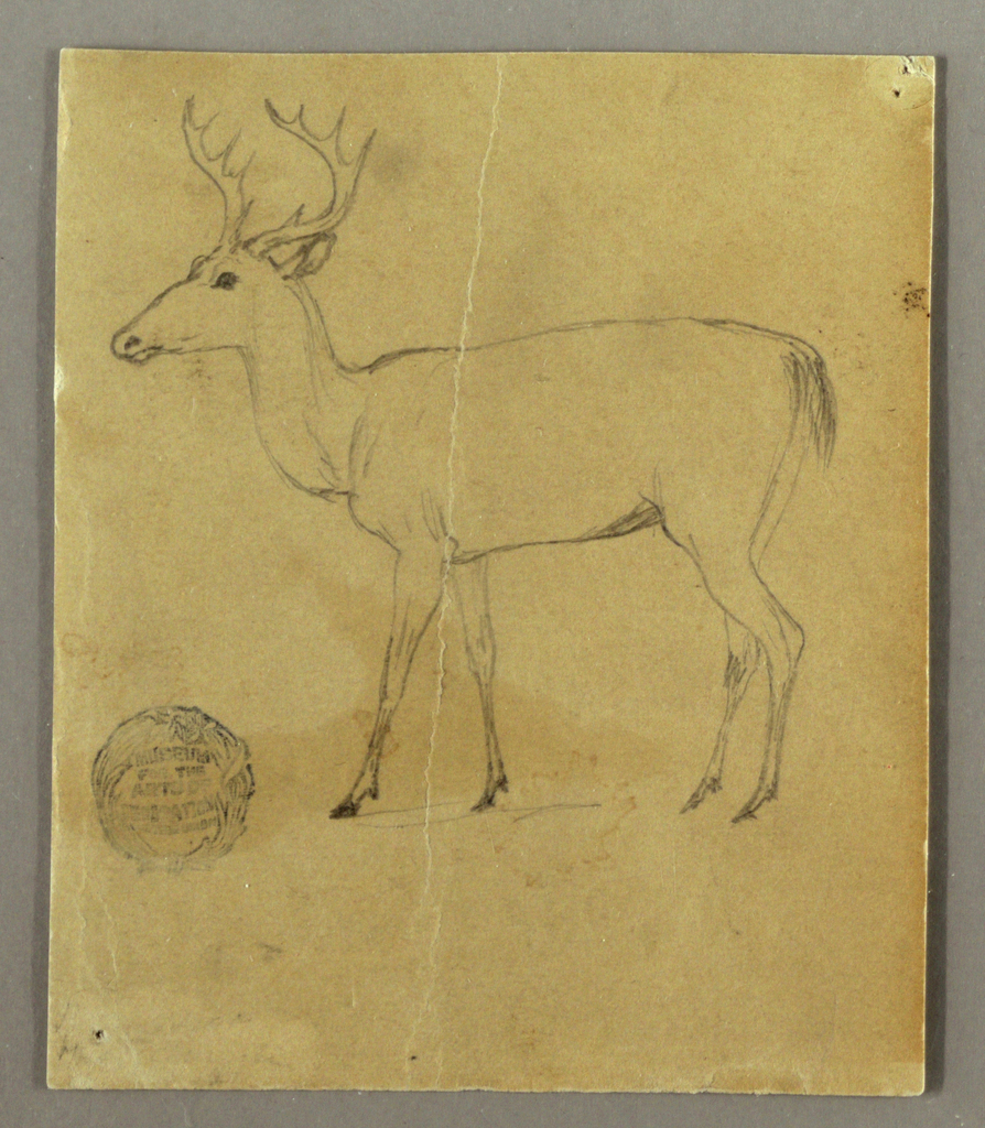 Vertical view of a standing stag shown in profile and turned toward the left.