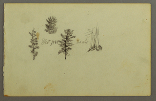 Drawing, Three evergreens, 1845
