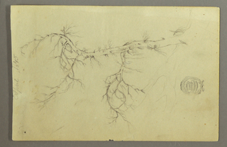 Drawing, A Leafless  Bough of a Tree, April 1845