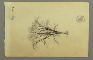 Recto: Leafless tree.  Verso:  Drawn horizontally near the right edge with strokes from a landscape sketch on the following page of the drawing book.