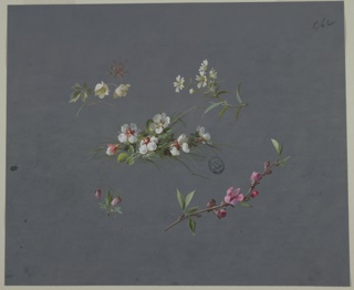 Five groups of flowers on dark blue-gray background. Four groupings at each corner with one in the center. Center: six white flowers with foliage and blades of green grass behind. Top left: one stem with two white flowers and foliage with brown foliage behind, tops of flowers facing right. Top right: four white flowers and one blossom on one stem with foliage with tops of flowers facing left. Bottom right: one branch with foliage and pink flowers and blossoms, facing right. Bottom left: two stems with foliage and one pink flower on each facing downward.