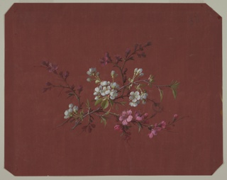 Two branches with flowers and foliage at center of page on rust-colored ground. Branches diagonal with tops facing right. Branch in foreground has white flowers, one in background has pink flowers.