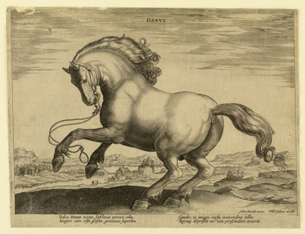 """A Danish horse from the fourth set of """"Equile Joannis Austriaci,"""" the stud of Don Juan of Austria (died 1578).  Horse galloping toward left. Signed bottom right: """"Johan. Strada. inuent. / Phls Gallaeus excudit.""""  At the bottom margin, a verse of two pairs of lines: """"Saltu Danus atrox,"""" etc."""