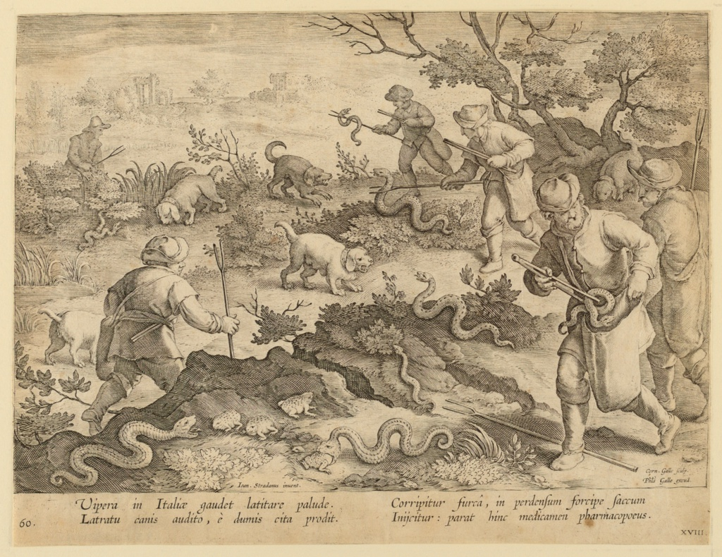 """Horizontal rectangle. Hunters and their dogs capturing snakes and bagging them alive. In the center, foreground, a snake devours a frog. Near left center: """"Ioan. Stradanus invent.""""; at lower right: """"Corn. Galle Sculp. / Phls Galle excud."""" Below: """"VIPERA IN ITALIAE GAUDET LATITARE PALIDE..."""""""