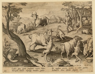 "Horizontal rectangle. In the foreground, foxes attack sheep and a bull. A shepherd and his dog run toward the scene, upper right. Flock of sheep, in background, right. Center: ""Ioan. Stradanus invent.""; at lower right: ""Ioan. Collaert Sculp. Phls Galle excud."" Below: ""CORSICA GUAS QIGNIT PRAE STANTI."""