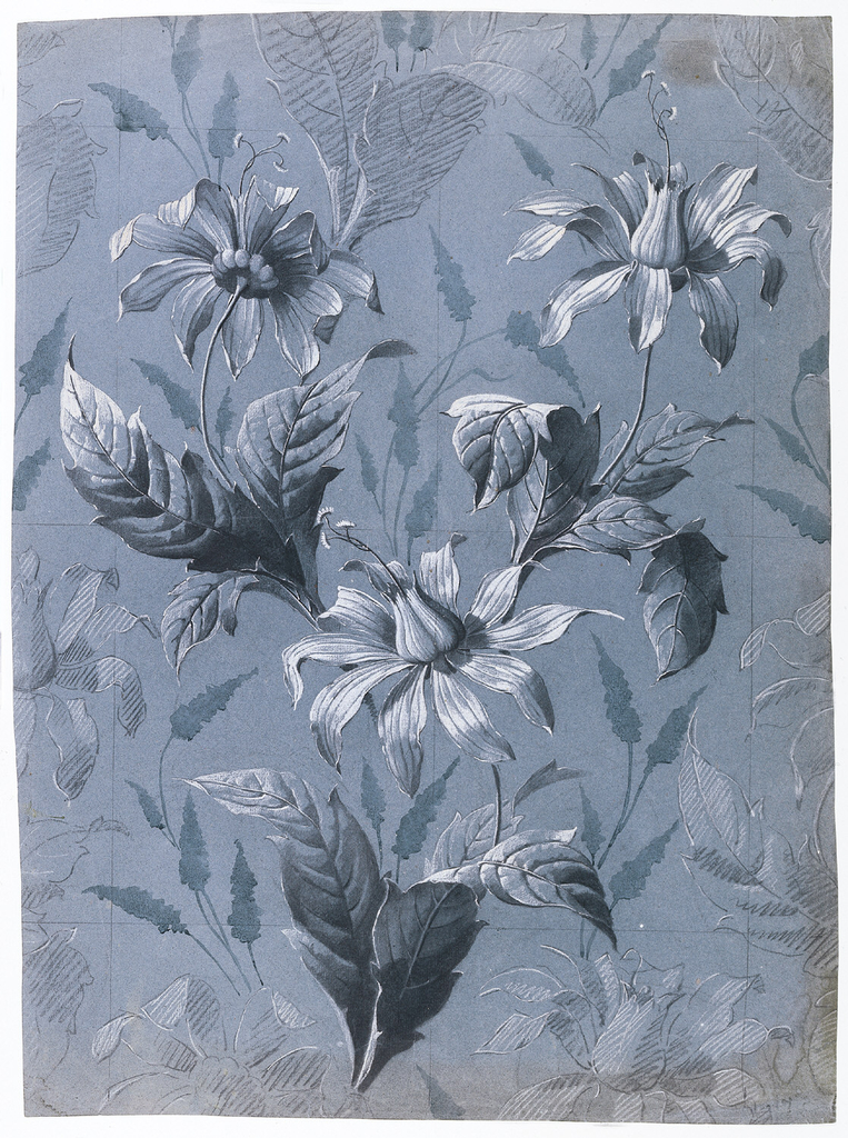 Three large, carefully-drawn sprays of an unidentified daisy-type flower with petals and tulip-shaped centers (not daffidil or narcissus) in black and white.  Two sprays placed at upper left and right and one spray lower center.  In background, broadly indicated arrow-shaped leaves in blue.  Around edges on four sides, lightly drawing indications of repeats.  Full repeat ruled in graphite with graphite ruled lines also marking vertical and horizontal center lines.