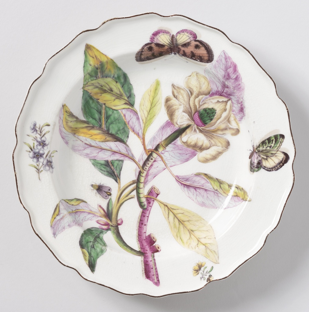 "A plate with a wavy, brown-edged rim. Botanical decoration of a Magnolia. Thick purple and green stem with yellow, green, and purple lanceate leaves. Large flower with yellowish curling petals and cone-shaped purple and green pistil. Sprigs of yellow and blue flowers. Two large butterflies, one moth. The decoration after Georg Dionysius Ehret (1708-1770), PLANTAE SELECTAE, 1770-1773, Tab.IX,  ""Magnolia..."""