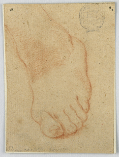 A left foot is depicted from above with the heel lifted and erect and the foot leaning  slightly towards the left side of the drawing.